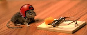 cropped-mouse-helmet-mousetrap